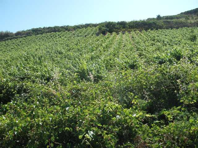 Terreno agricolo a VITA 107000 Mq