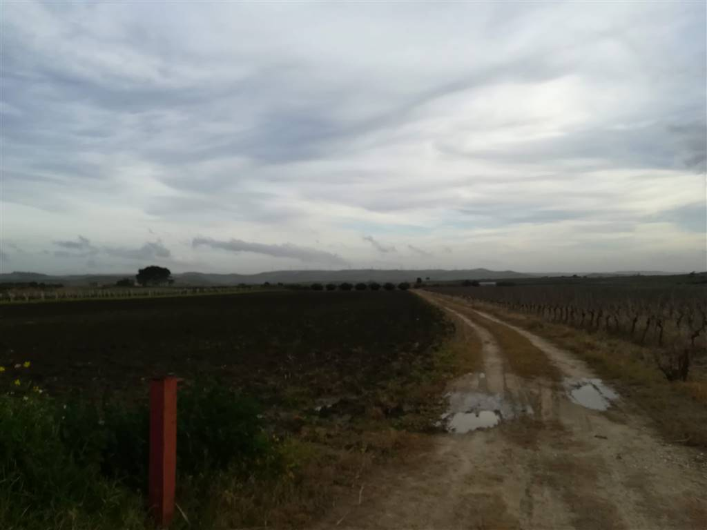 Farming plot of land in SALEMI 20000 Sq. mt.