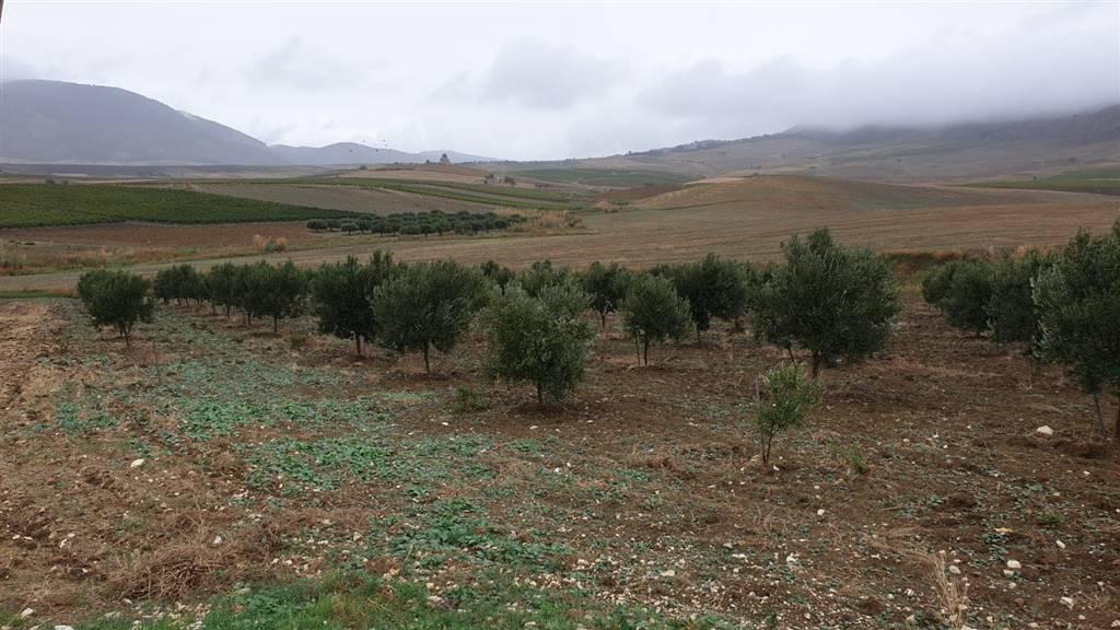 Landwirtschaftliches Grundstueck in SALEMI 8000 Qm
