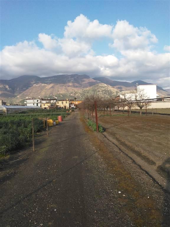 Terreno agricoloaSAN VALENTINO TORIO