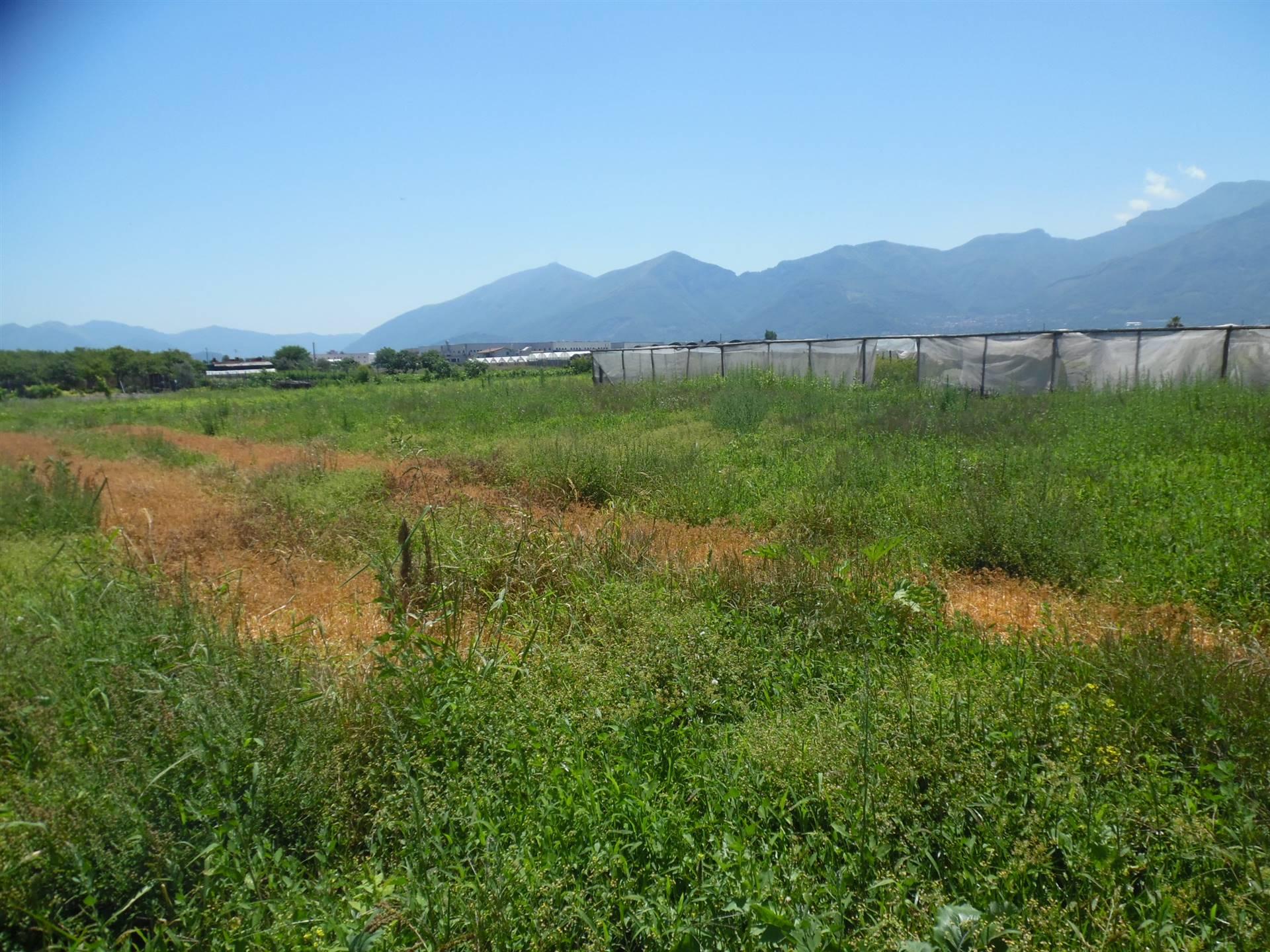 Terreno agricoloaANGRI