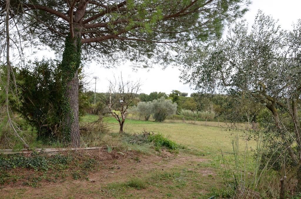 Terreno Agricolo in vendita a Viterbo, 1 locali, zona Località: PONTE DI CETTI, prezzo € 16.000   CambioCasa.it