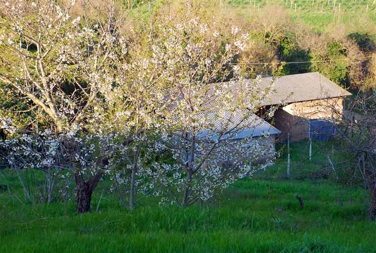 Terreno Agricolo in vendita a Montefiascone, 9999 locali, prezzo € 15.000 | CambioCasa.it
