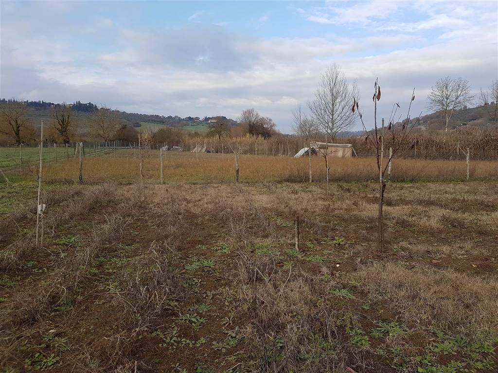 Terreno agricolo a COLLE DI VAL D'ELSA