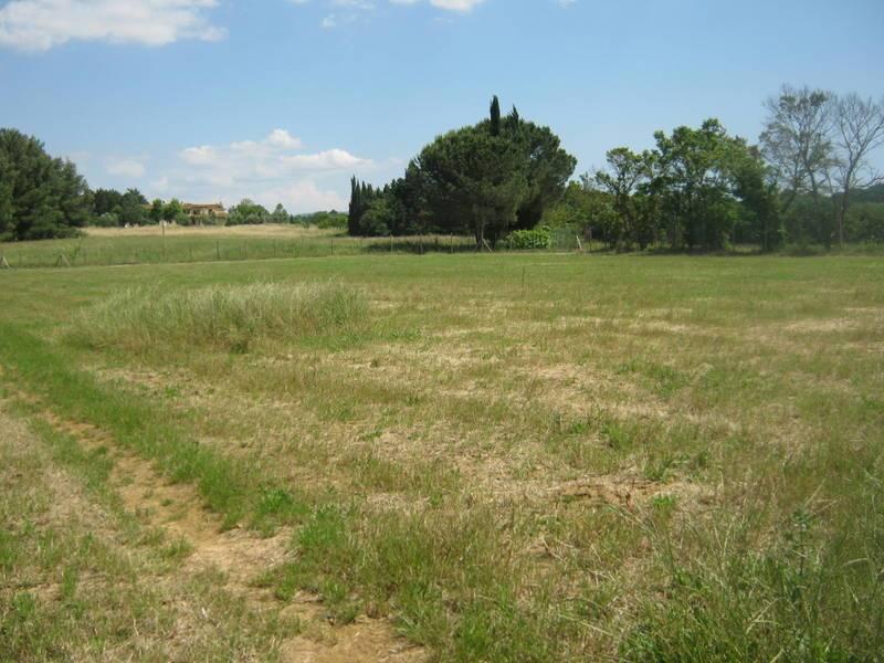 Azienda agricola in vendita a Fauglia (PI)