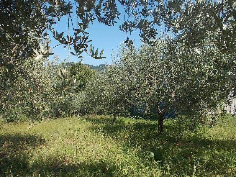 Terreno/Olive grove