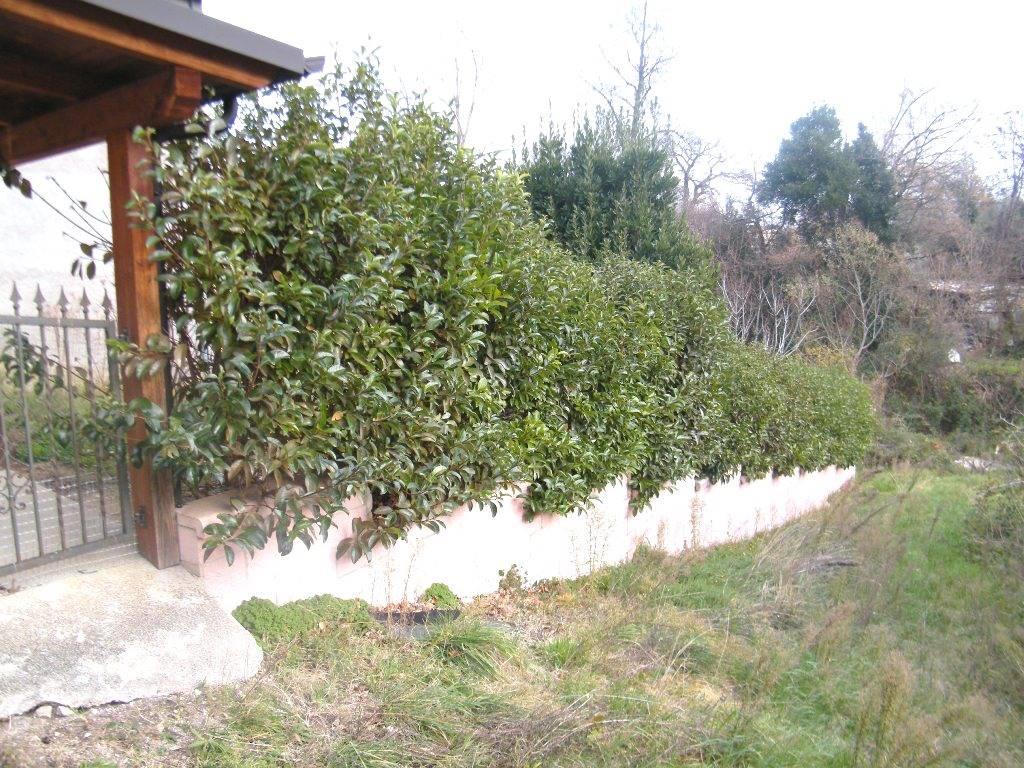 Recinzione giardino/garden fence