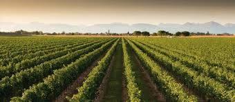 Azienda Agricola in vendita a Montalto Uffugo, 1 locali, prezzo € 1.300.000 | CambioCasa.it