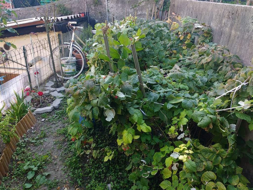 prima porzione di giardino