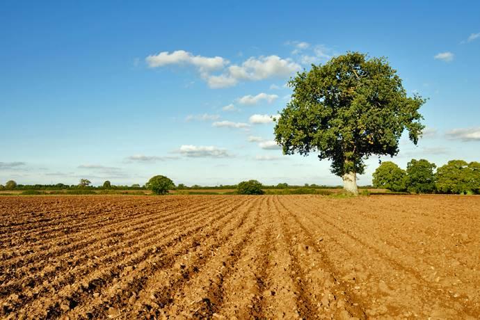 Terrain agricoles au SUZZARA