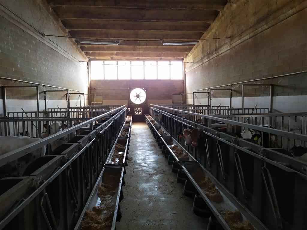 Allevamento di vitelli a carne bianca, composto da due stalle, barchessa per il fieno, officina e deposito attrezzi. Dietro le stalle è presente un
