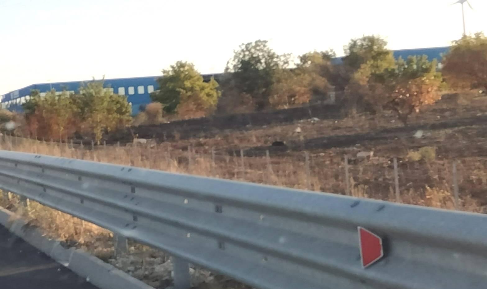 Terreno Agricolo in vendita a Grumo Appula, 9999 locali, prezzo € 4.800   CambioCasa.it