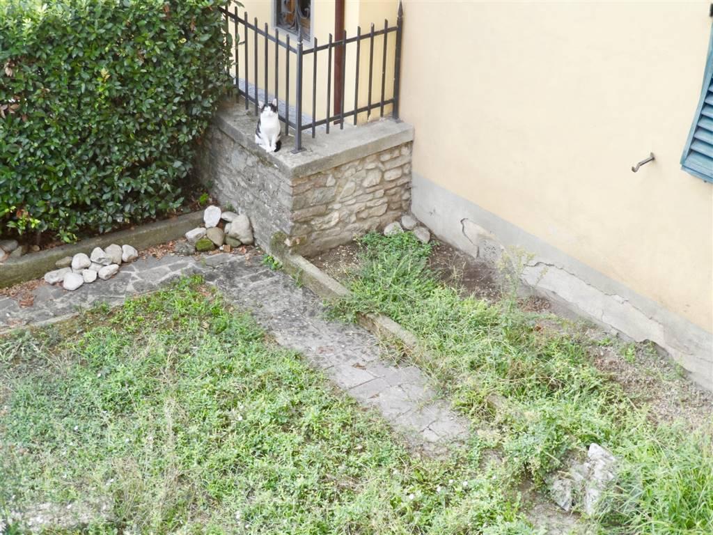 giardino con gatto :)