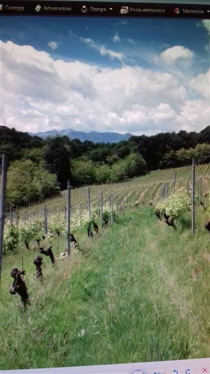 Terreno Agricolo in vendita a Roasio, 9999 locali, Trattative riservate | CambioCasa.it