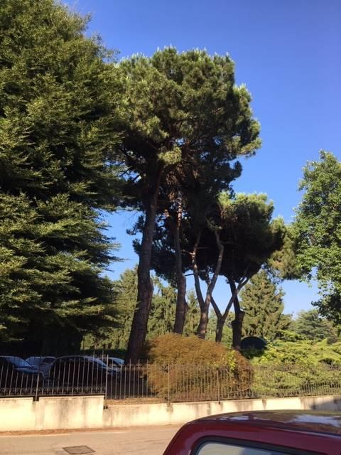 Foto giardino - Rif. FV171