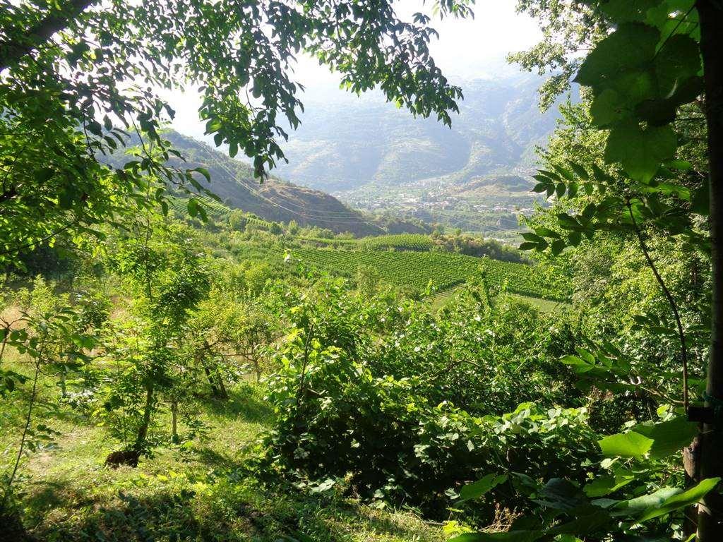 Terreno Agricolo in vendita a Aymavilles, 9999 locali, prezzo € 11.000 | CambioCasa.it
