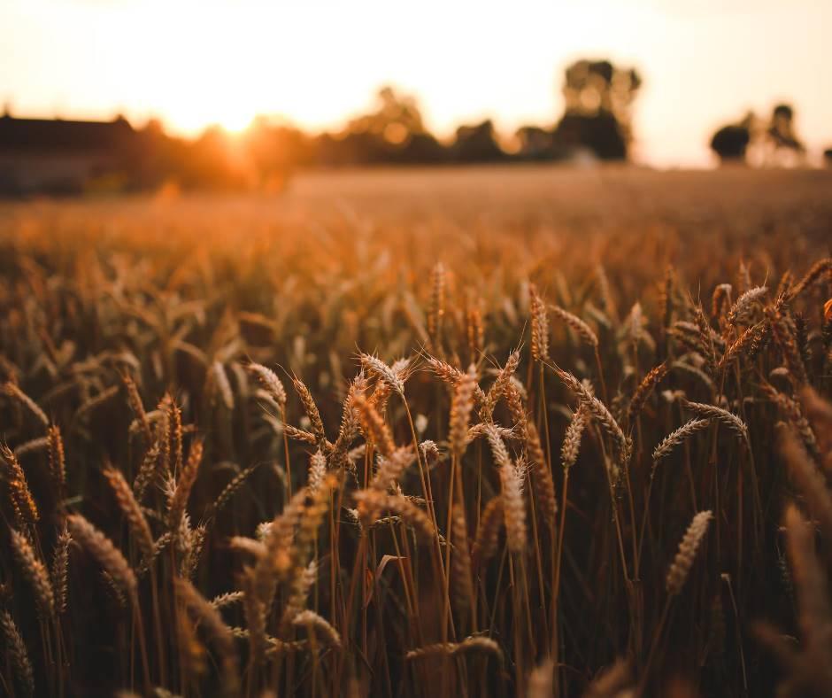 CAVALLINO, CAVALLINO TREPORTI, Landwirtschaftliches Grundstueck zu verkaufen von 3000 Qm, Energie-klasse: Nicht unterstellt, zusammengestellt von: ,