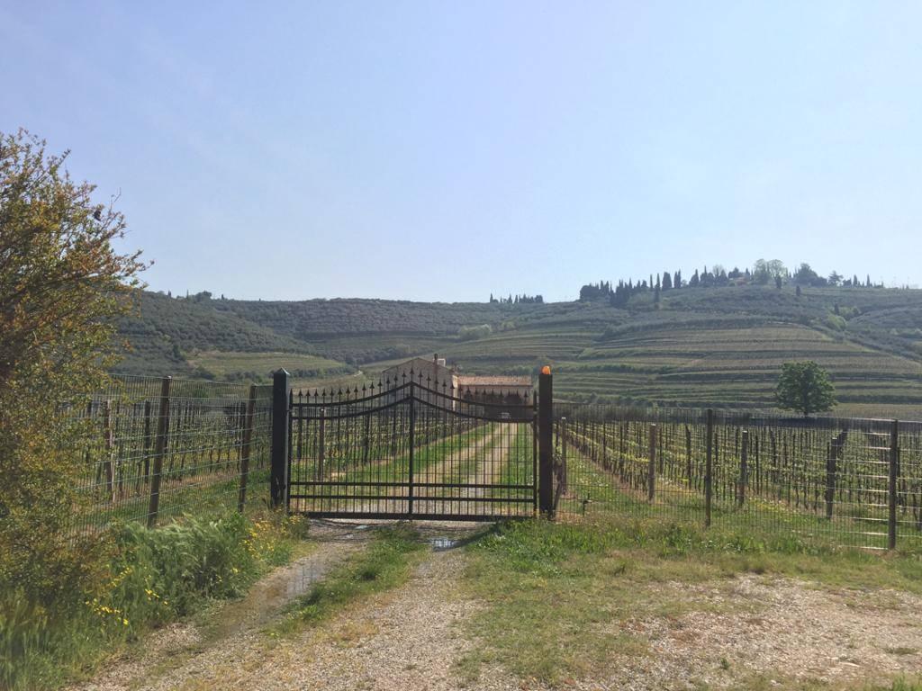 Terreno Agricolo in vendita a Illasi, 8 locali, Trattative riservate   PortaleAgenzieImmobiliari.it