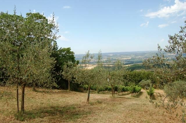 Soluzione Indipendente in vendita a Montecchio, 5 locali, zona Zona: Tenaglie, prezzo € 80.000 | CambioCasa.it