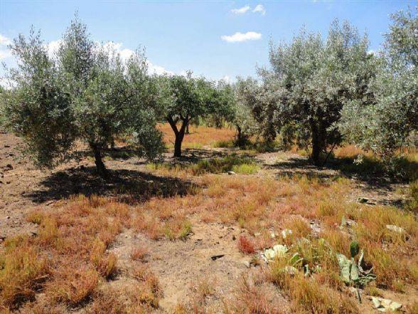 Terreno Agricolo in vendita a Comiso, 9999 locali, zona Zona: Pedalino, prezzo € 21.000 | CambioCasa.it