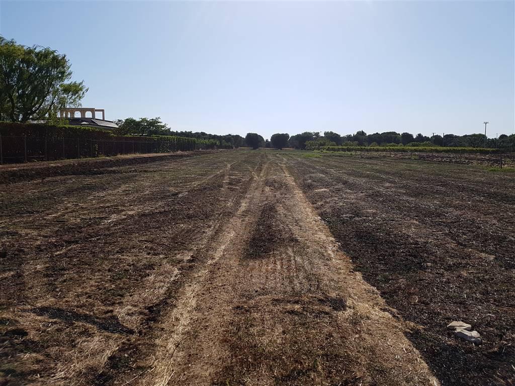 Terreno Agricolo in vendita a Mesagne, 9999 locali, zona Località: C.DA EPIFANI, prezzo € 19.000 | PortaleAgenzieImmobiliari.it