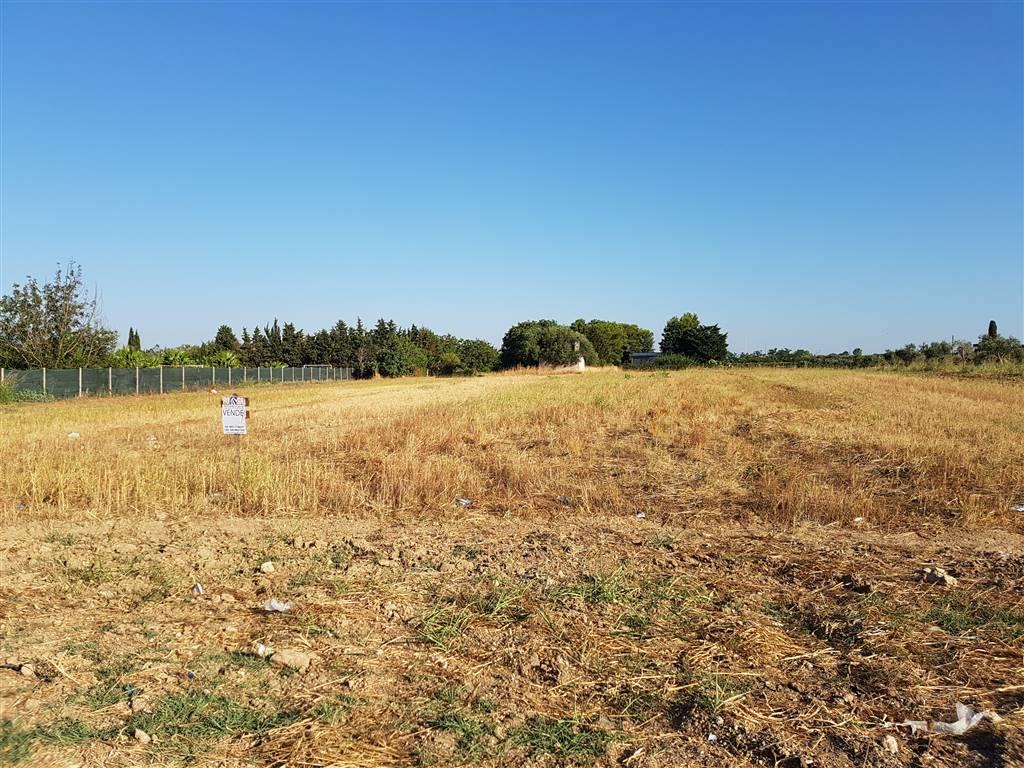 Terreno Agricolo in vendita a Mesagne, 9999 locali, zona Località: C.DA TUMO, prezzo € 38.000 | PortaleAgenzieImmobiliari.it