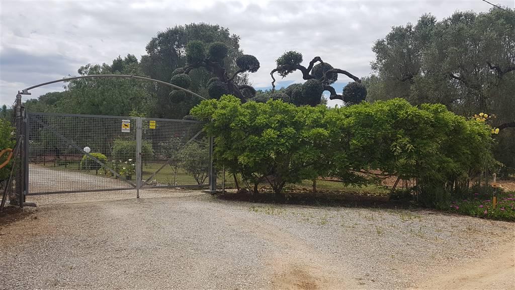 Terreno Agricolo in vendita a Mesagne, 9999 locali, zona Località: C.DA ORFANI, prezzo € 38.000 | PortaleAgenzieImmobiliari.it