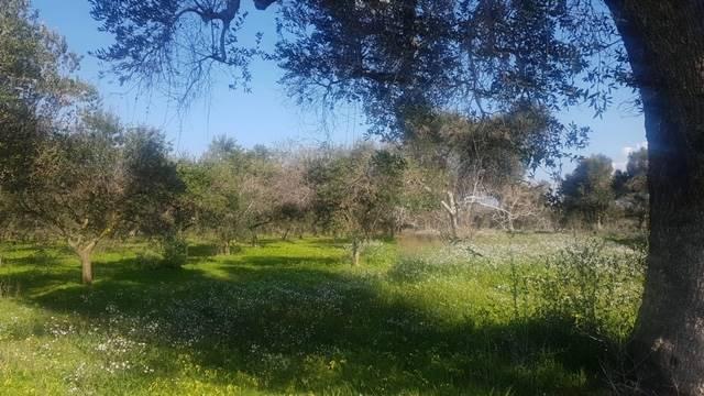 Terreno Agricolo in vendita a Mesagne, 9999 locali, prezzo € 13.000 | PortaleAgenzieImmobiliari.it