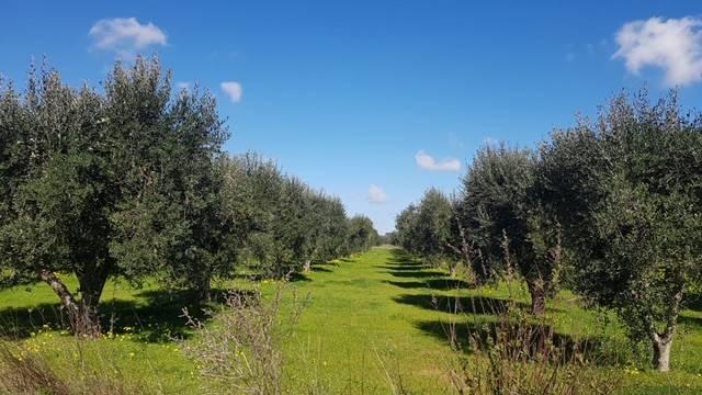 Terreno Agricolo in vendita a Mesagne, 9999 locali, prezzo € 36.000 | PortaleAgenzieImmobiliari.it