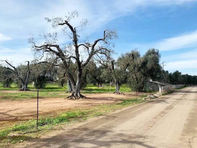 Terreno Agricolo in vendita a Mesagne, 9999 locali, zona Località: C.DA BOSCO COLOMBO, prezzo € 10.000 | PortaleAgenzieImmobiliari.it