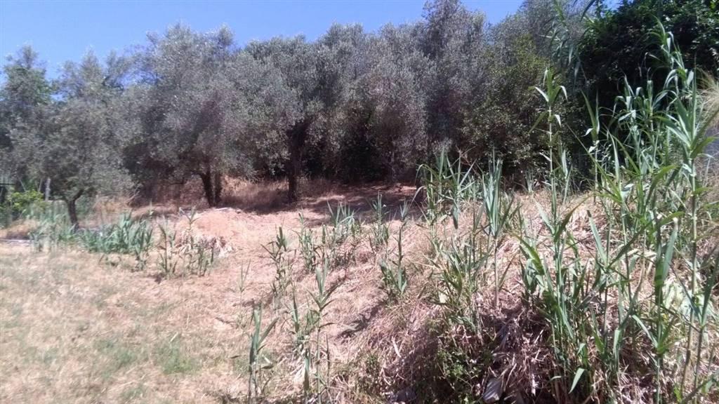 Terreno Edificabile Residenziale in vendita a Filacciano, 9999 locali, prezzo € 21.000 | CambioCasa.it