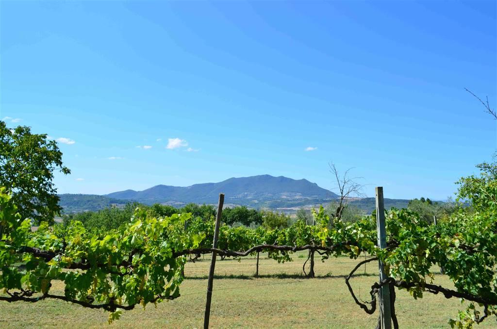 STIMIGLIANO - Proponiamo in vendita un bellissimo terreno agricolo di 12.000 mq semi-pianeggiante con eccellente esposizione. Il terreno, molto