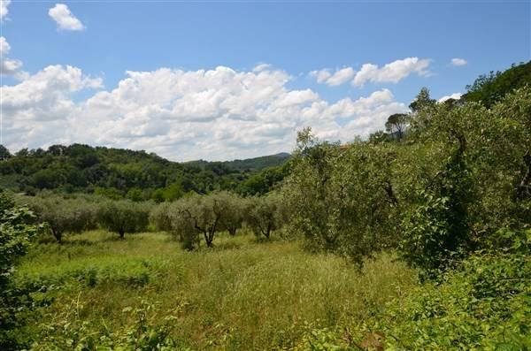 PONZANO ROMANO, proponiamo in vendita Terreno Agricolo di 11.000 mq coltivato ad Uliveto in posizione molto soleggiata e semi-pianeggiante. Nel