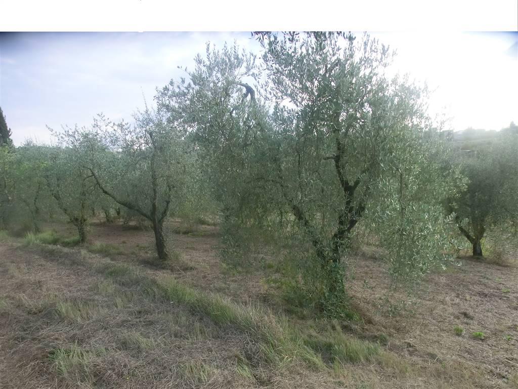 Terreno Agricolo in vendita a Capannoli, 9999 locali, zona Località: SANTOPIETRO BELVEDERE, prezzo € 75.000 | CambioCasa.it