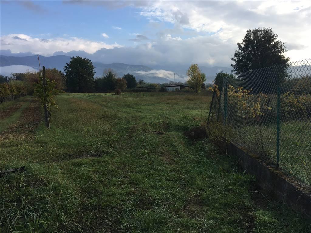 Terreno Agricolo in vendita a Castelnuovo Magra, 9999 locali, zona mbiera, prezzo € 60.000   PortaleAgenzieImmobiliari.it