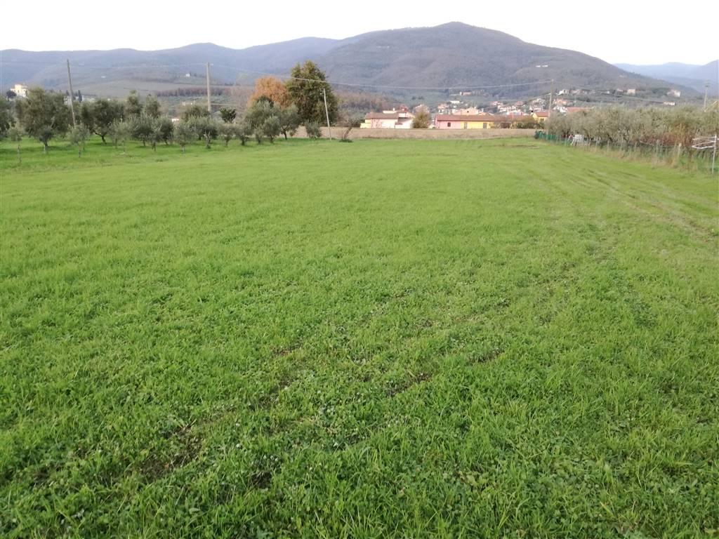Terreno Agricolo in Vendita a Montale