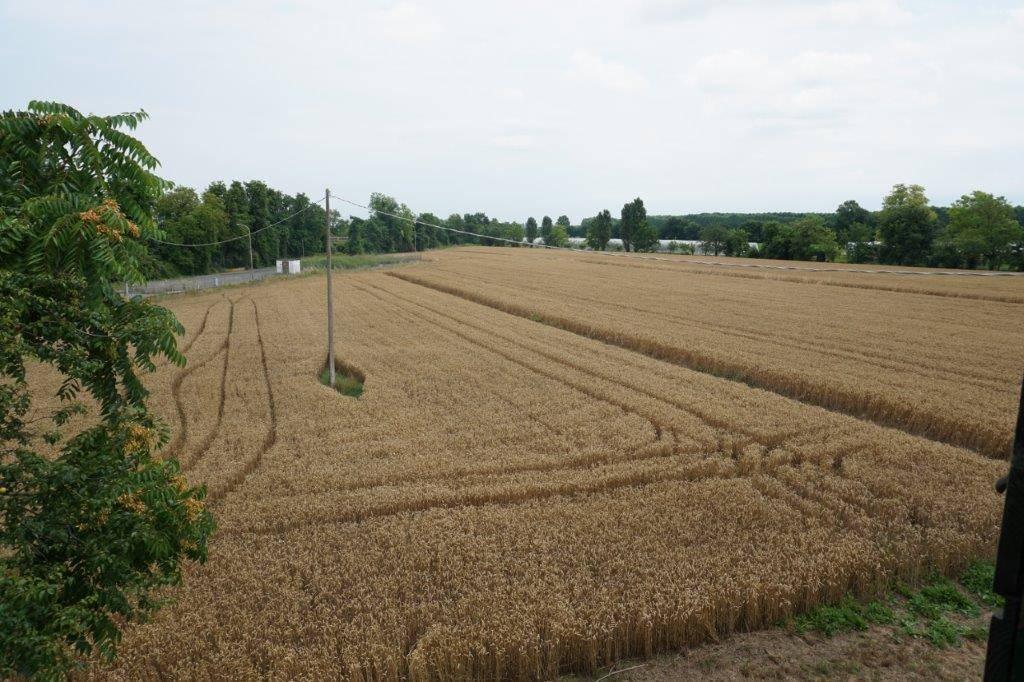 Terreno Agricolo in vendita a Roncade, 9999 locali, zona Zona: Musestre, prezzo € 175.000 | CambioCasa.it
