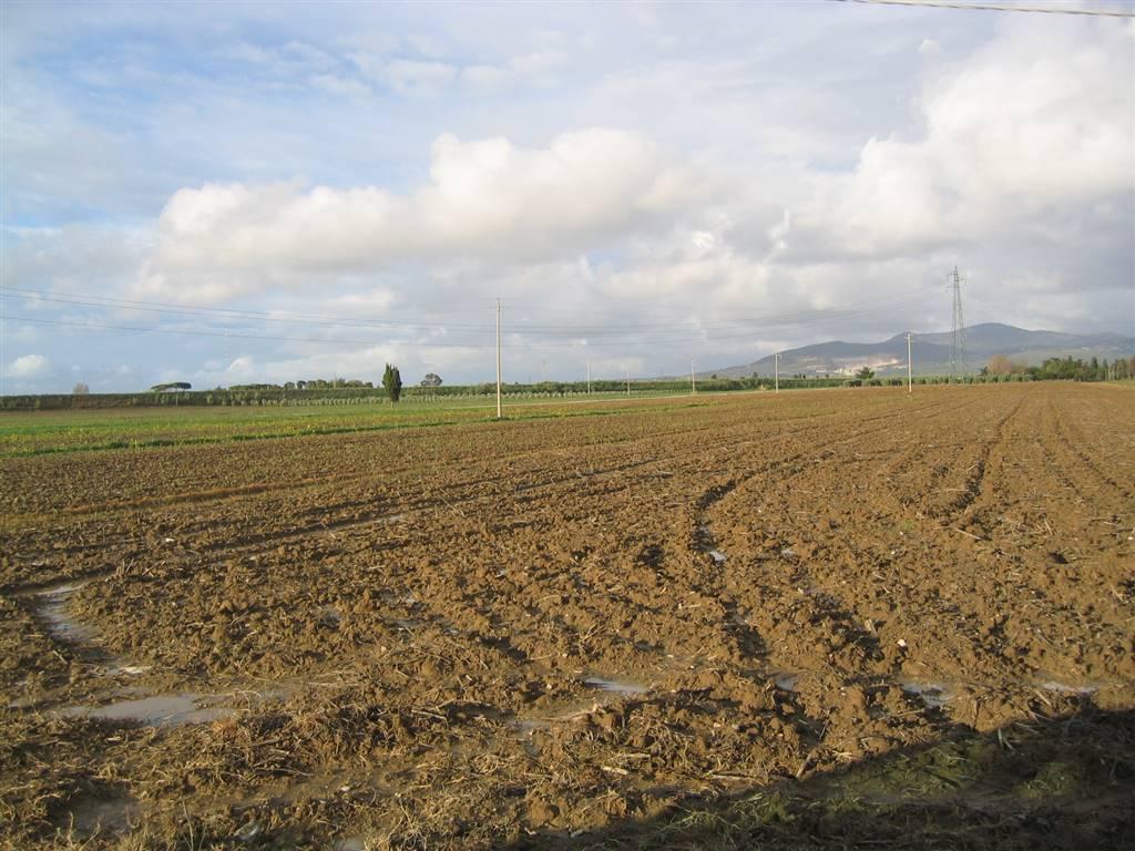 Terreno agricolo, La Sdriscia, Piombino