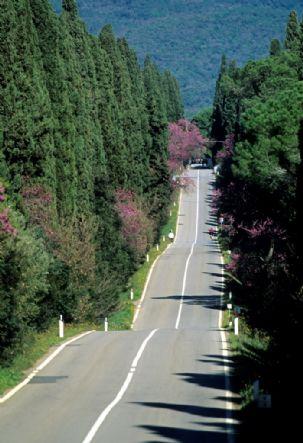 Viale dei Cipressi di Bolgheri