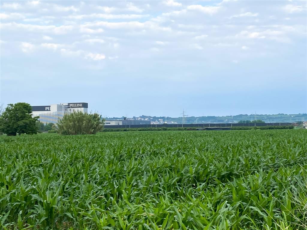 Terreno Agricolo in vendita a Bussolengo, 9999 locali, prezzo € 200.000 | CambioCasa.it