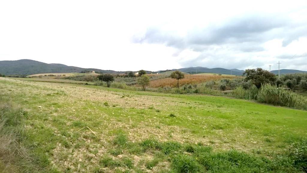 Terreni agricoli a bibbona in vendita e affitto for Case affitto savignone