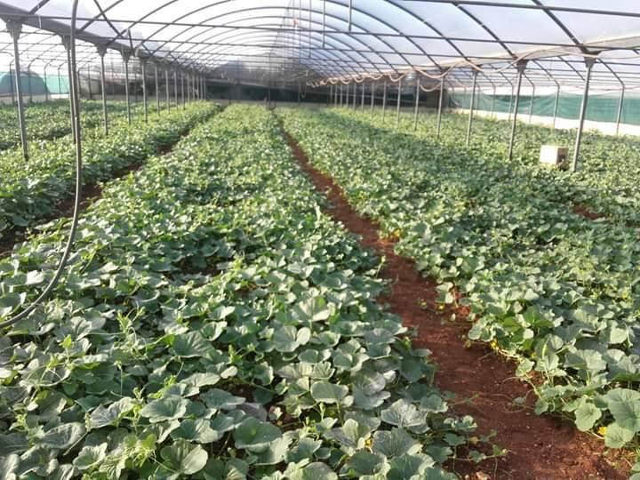 Terreno Agricolo in vendita a Monopoli, 9999 locali, zona Località: SANTANTONIO DASCULA, prezzo € 320.000 | CambioCasa.it