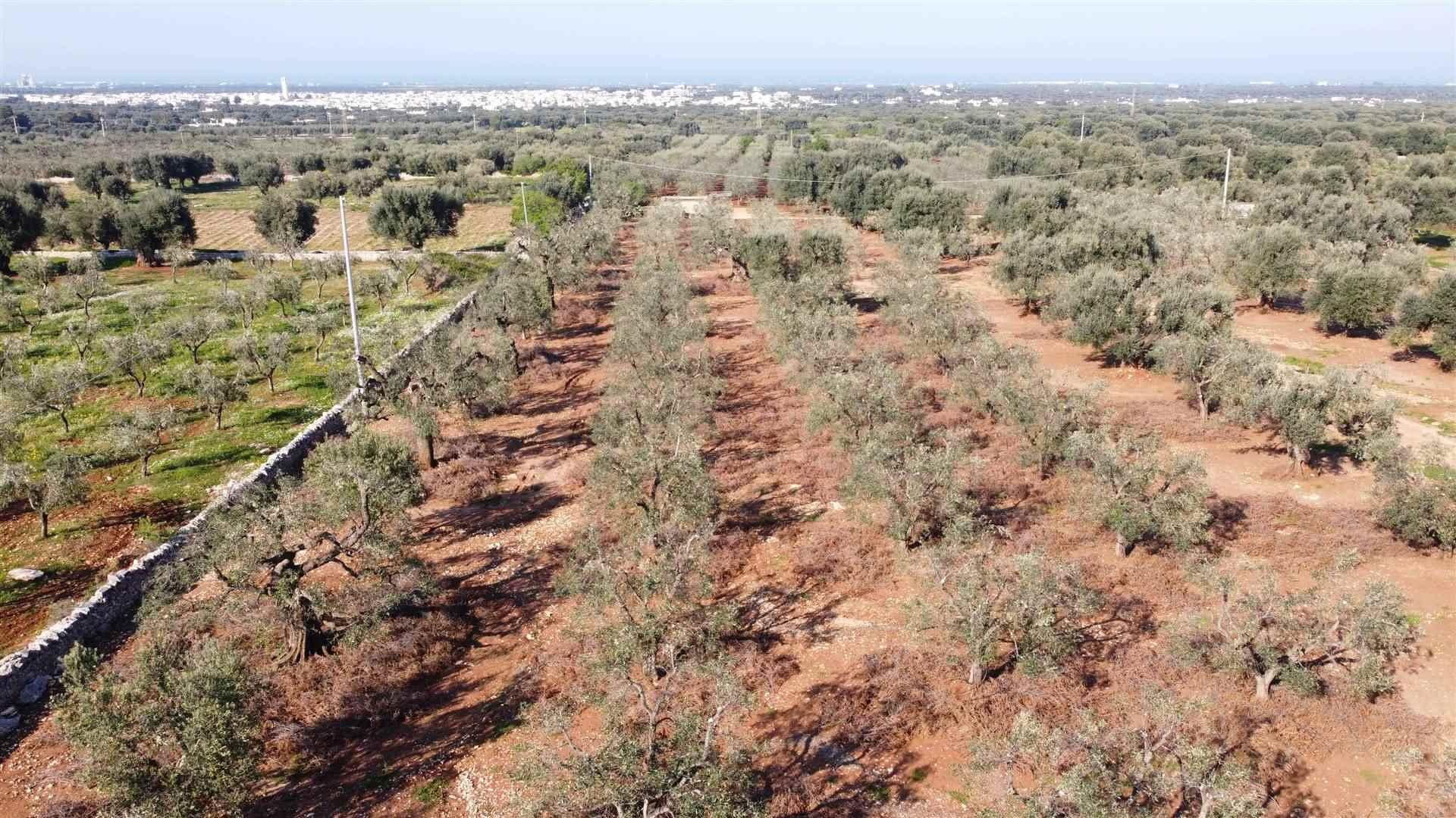 Terreno Agricolo in vendita a Fasano, 9999 locali, zona Zona: Pezze Di Greco, prezzo € 50.000 | CambioCasa.it