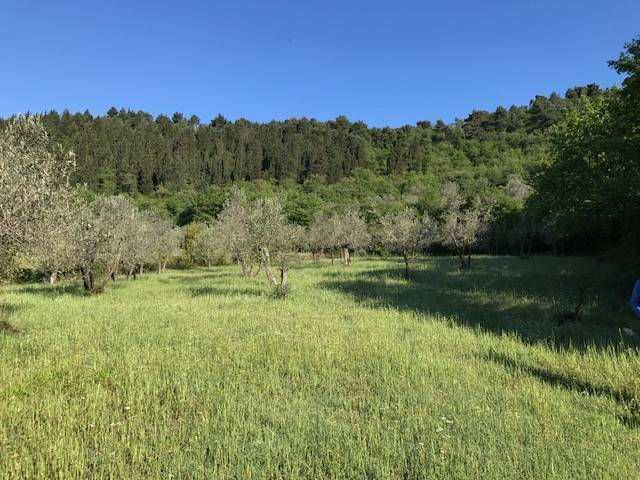 BARONCOLI, CALENZANO, Farming plot of land for sale of 3070 Sq. mt., Energetic class: G, composed by: , Price: € 25,000
