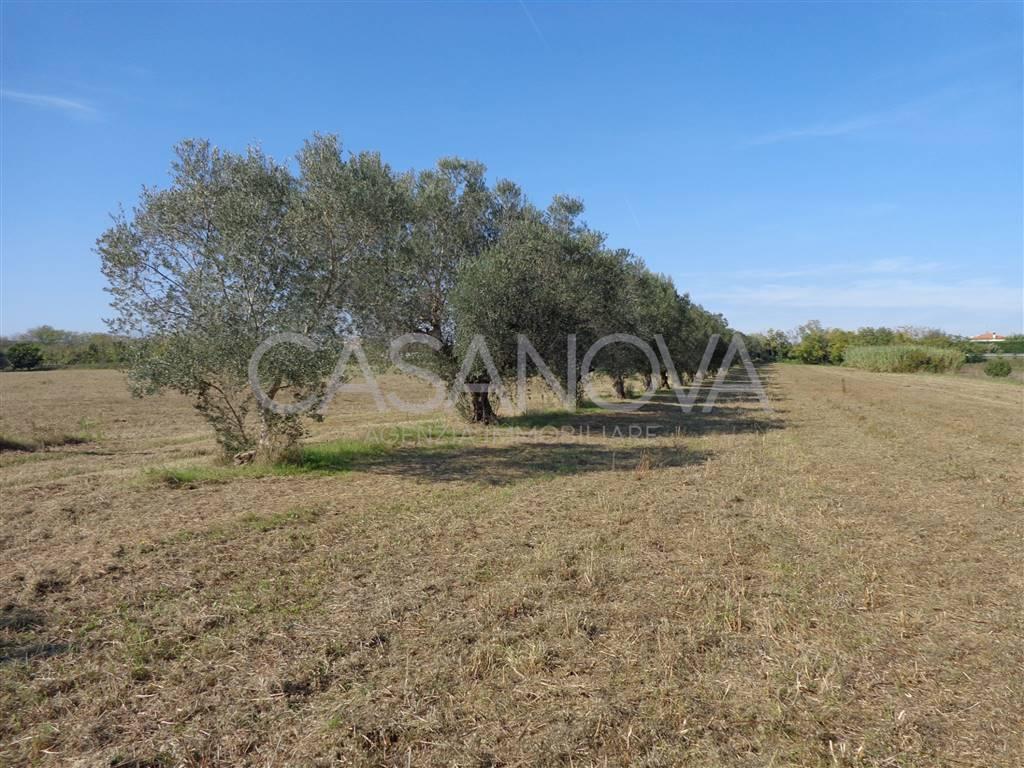 Terreno Agricolo in vendita a Giulianova, 9999 locali, prezzo € 230.000 | CambioCasa.it