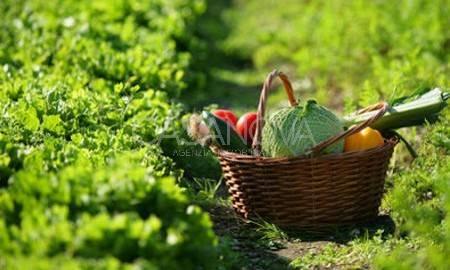 Terreno Agricolo in vendita a Giulianova, 9999 locali, zona Località: ALTA, prezzo € 39.000 | CambioCasa.it