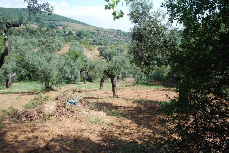 Vendita terreno agricolo piombino piano terra rif ri p697 - Immobiliare il gioiello ...