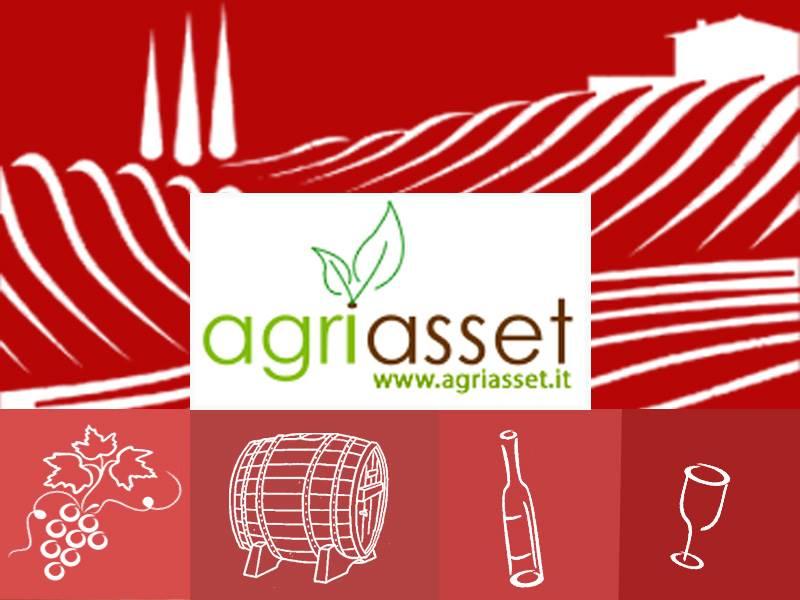 Azienda Agricola in vendita a Neive, 5 locali, prezzo € 700.000 | PortaleAgenzieImmobiliari.it