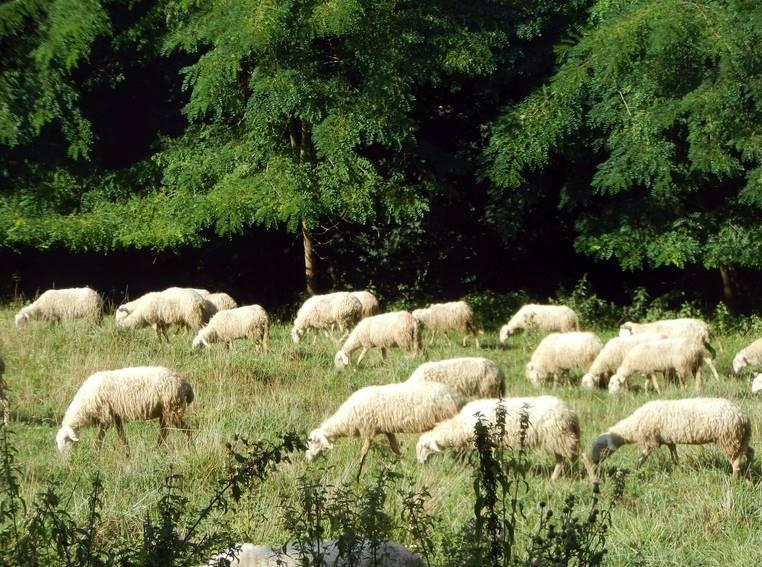 Azienda Agricola in vendita a Murazzano, 12 locali, prezzo € 435.000 | PortaleAgenzieImmobiliari.it