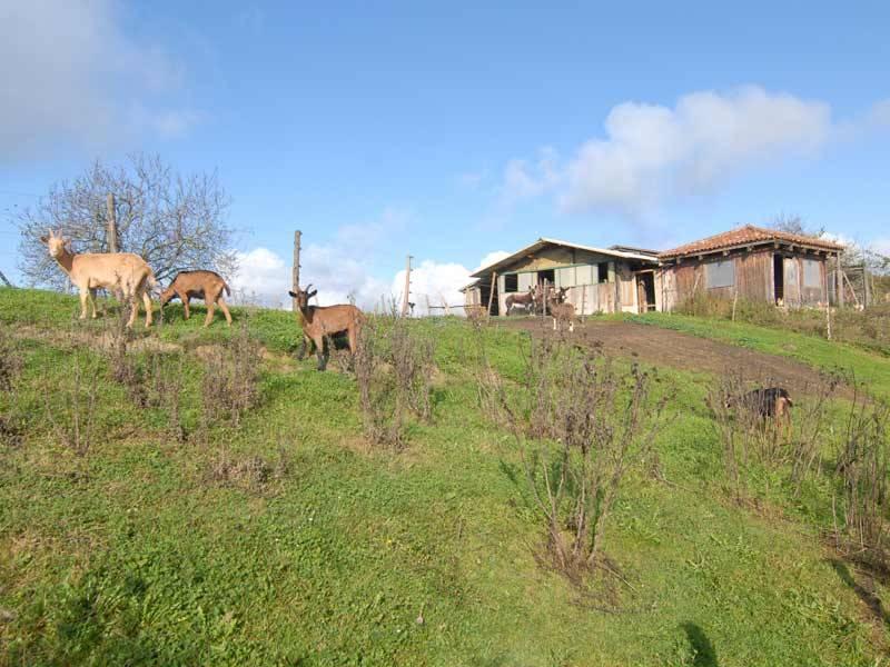 Azienda Agricola in vendita a Murazzano, 12 locali, prezzo € 480.000   PortaleAgenzieImmobiliari.it